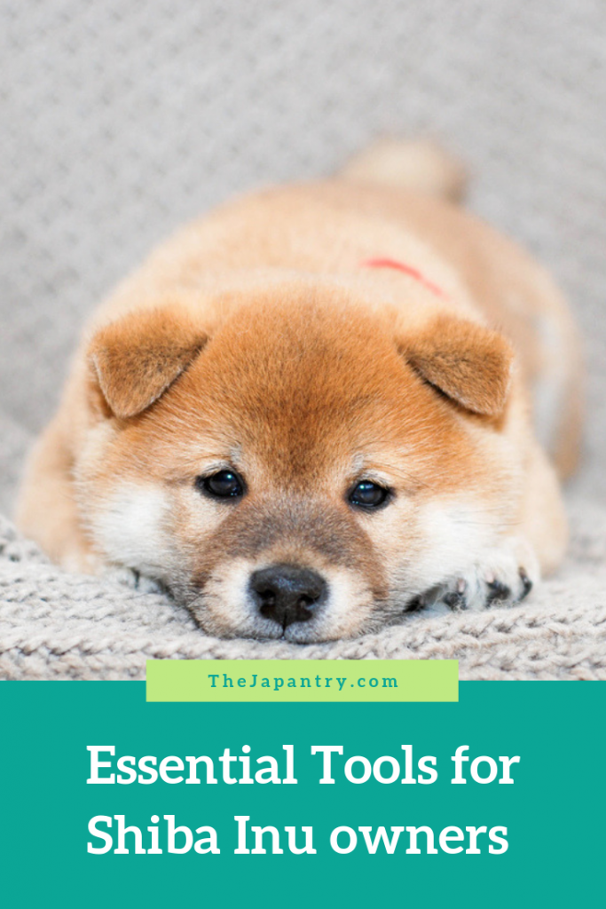 Essential Tools For Shiba Inu Owners The Japantry